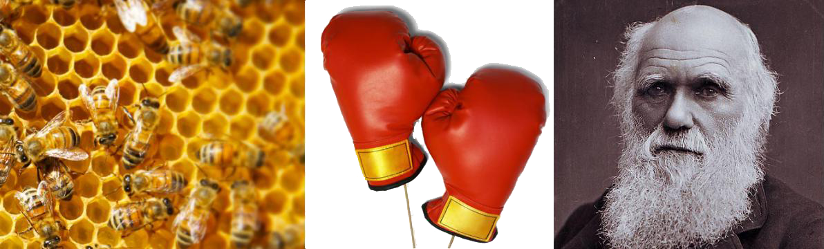 Μέλισσα εναντίον Δαρβίνου